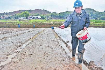 新万博manbetx官网登录龙岩:政策支持 耕种及时