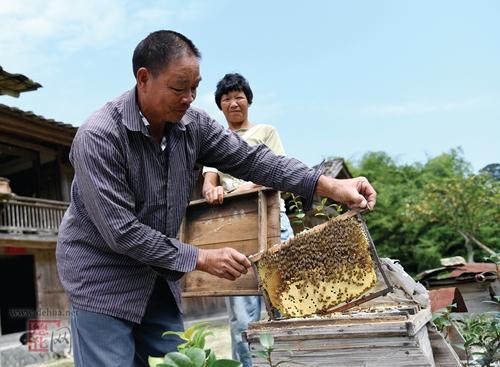 德化县:支持农业生产复工复产政策落地