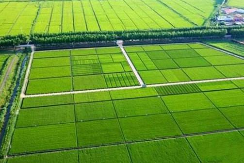 """打造三明""""中国稻种基地"""""""